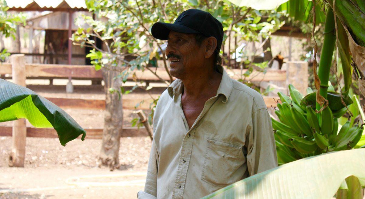 Juan del Dies zwischen seinen Bananenstauden